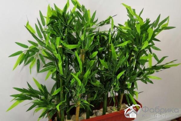Арундинария: выращивание и правильный уход