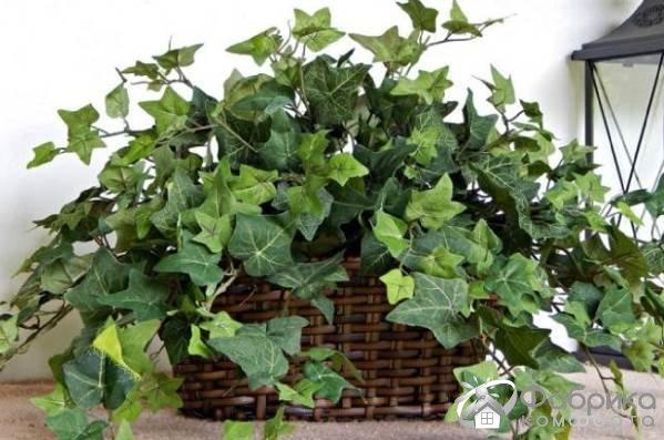 Комнатные растения для снятия стресса
