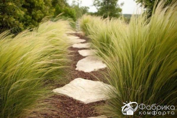 Ковыль: выращивание и правильный уход
