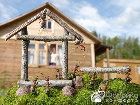 Как избавиться от муравьев в доме и саду