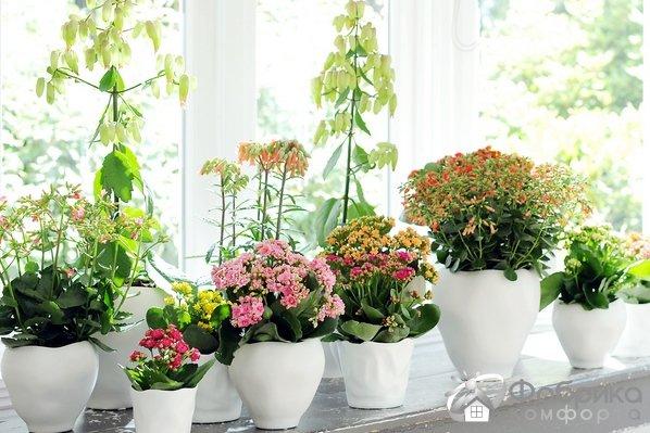 Распространенные ошибки при уходе за комнатными растениями